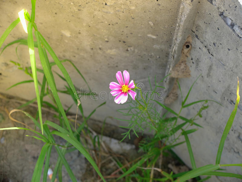 Poco dolce del fiore immagini stock libere da diritti