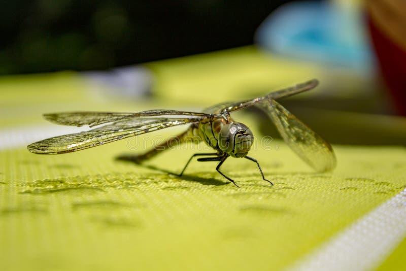 Poco drago di volo verde con l'ala rotta immagine stock