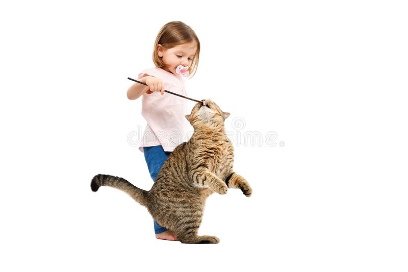 Poco dueño juega con su gato imagenes de archivo