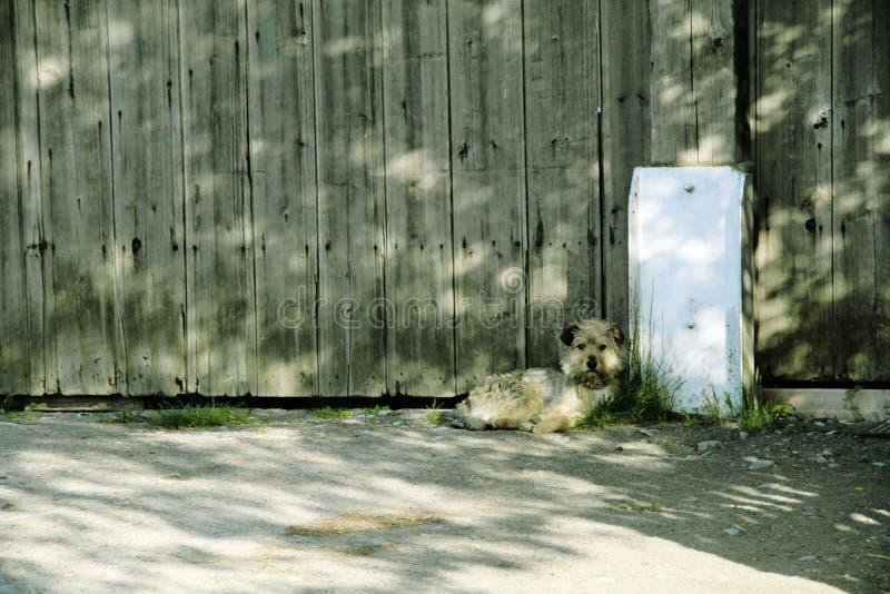 Poco esperas del perro para los dueños foto de archivo libre de regalías
