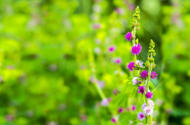 Poco fiore viola fotografia stock