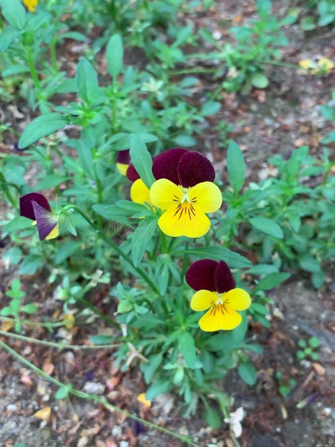 Poco flor en el camino fotos de archivo libres de regalías