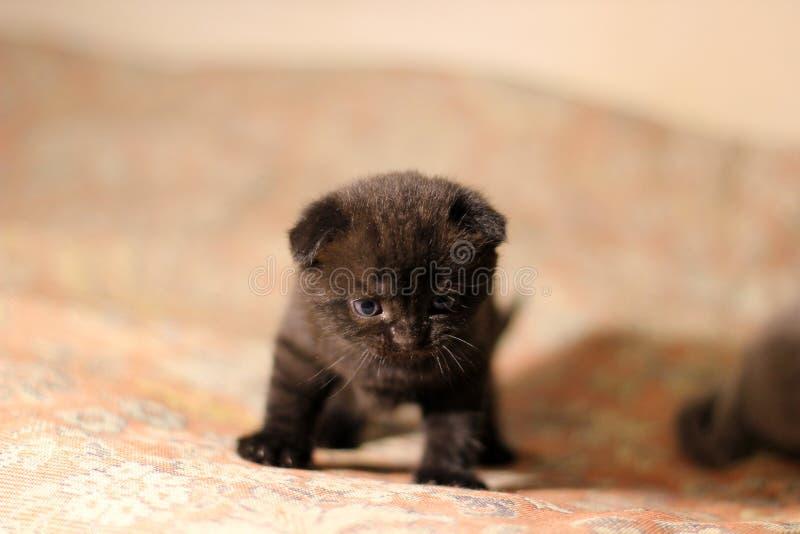 Poco gatito en el sofá fotografía de archivo libre de regalías