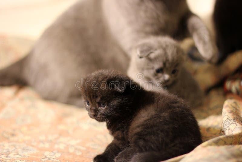 Poco gatito en el sofá fotos de archivo