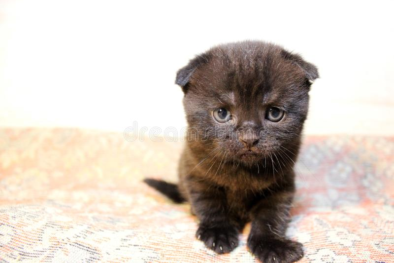 Poco gatito en el sofá fotos de archivo libres de regalías