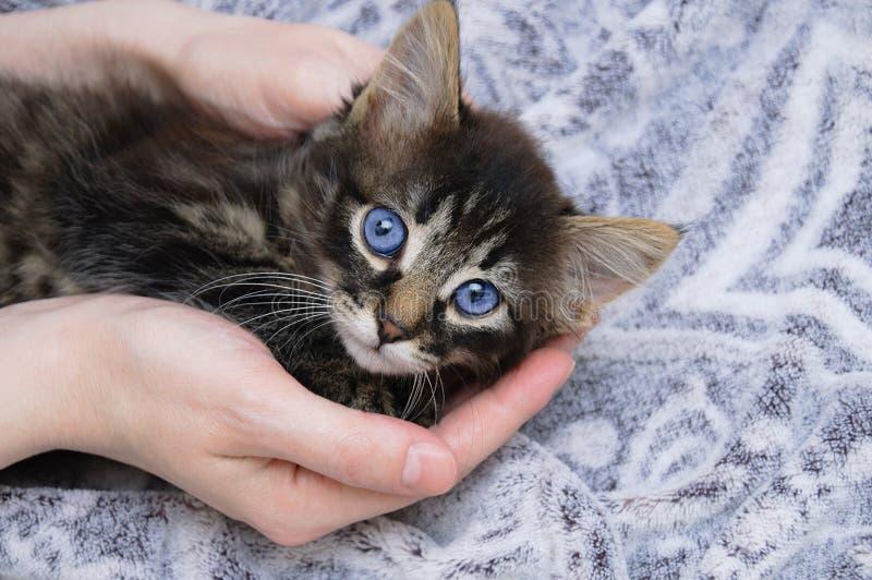 Poco gatito en las manos de una muchacha caucásica Casas en la manta imagenes de archivo