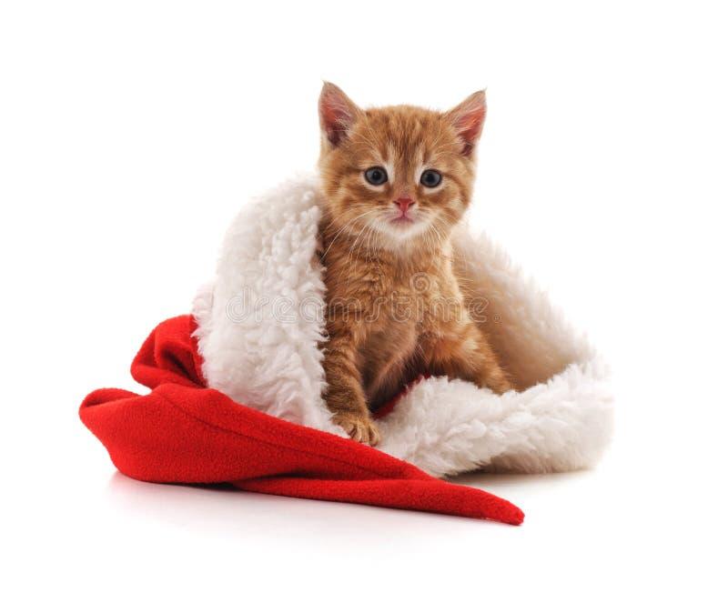 Poco gatito en un sombrero de la Navidad fotos de archivo libres de regalías