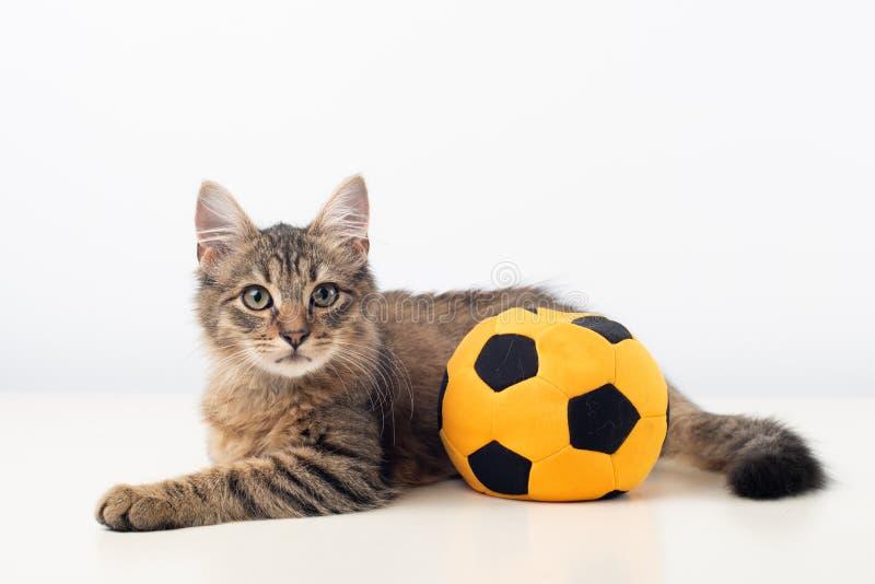 Poco gatito mezclado cuatrimestral de la raza con la bola del fútbol foto de archivo libre de regalías