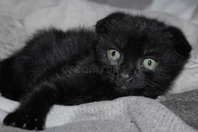 Poco gatito negro con los ojos tristes fotos de archivo libres de regalías