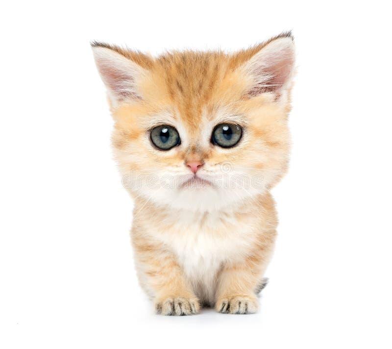 Poco gatito triste divertido con los ojos grandes, aislados en el fondo blanco imagen de archivo libre de regalías
