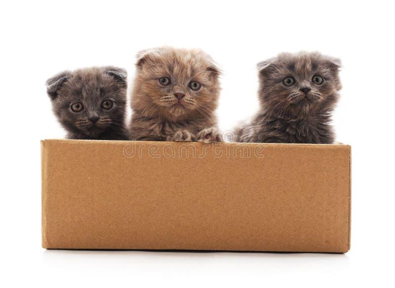 Poco gatitos en la caja fotografía de archivo libre de regalías