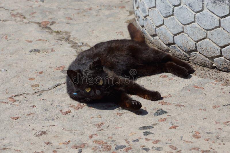 Poco gato negro miente y mira en un camino sucio gris en la calle foto de archivo