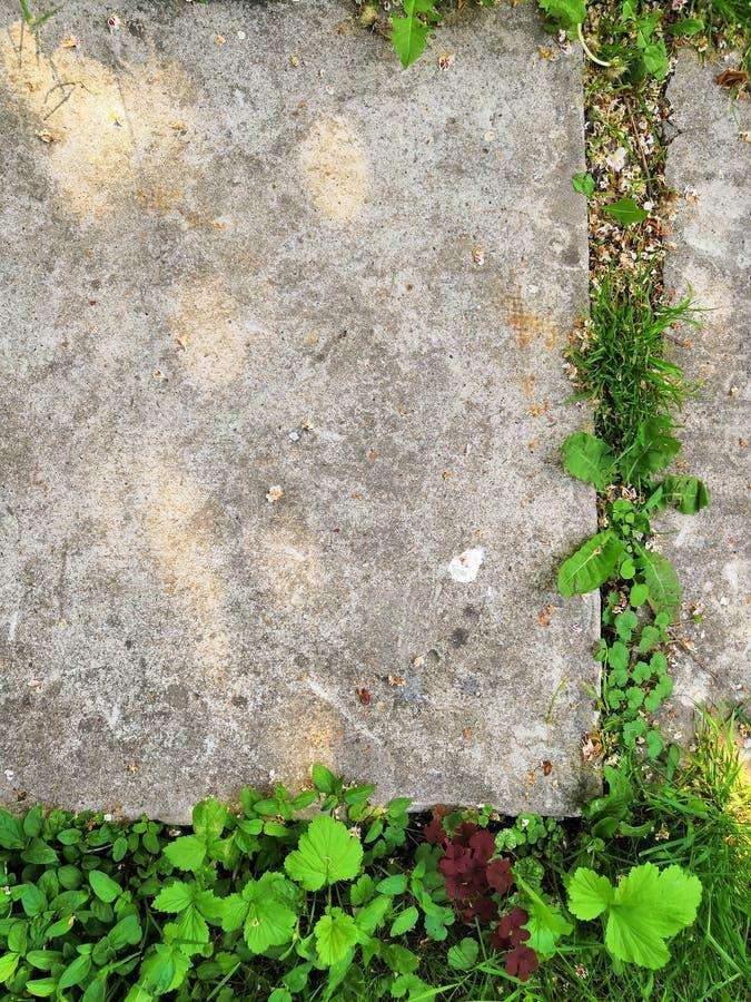 Poco germoglio del fiore si sviluppa attraverso la terra urbana dell'asfalto fotografia stock
