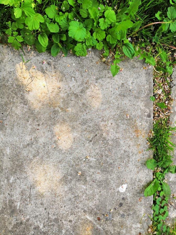 Poco germoglio del fiore si sviluppa attraverso la terra urbana dell'asfalto immagini stock
