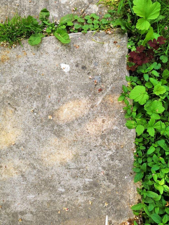 Poco germoglio del fiore si sviluppa attraverso la terra urbana dell'asfalto fotografie stock libere da diritti
