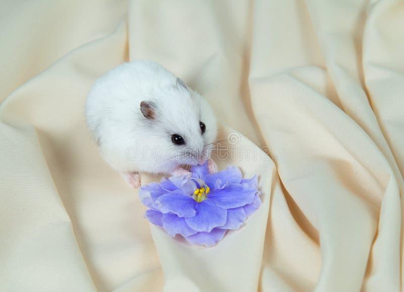 Poco hámster en un fondo ligero con una flor grande imágenes de archivo libres de regalías