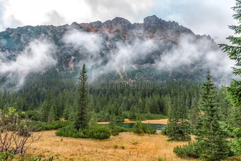 Poco lago cerca de árboles con el fondo de las montañas de Tatra, parque nacional, Polonia fotos de archivo libres de regalías