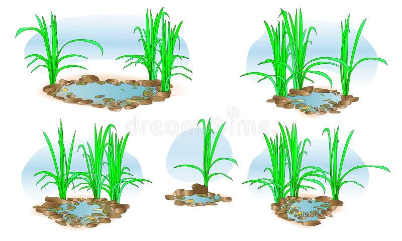 Poco lago con erba Vettore Per progettazione e stampa del paesaggio Illustrazione insieme illustrazione di stock
