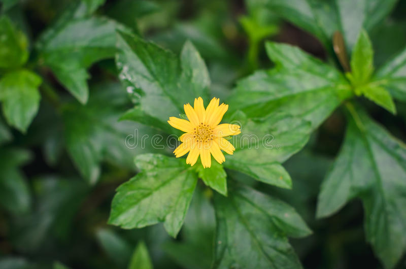 Poco los flowrrs amarillos de la estrella con grren licencia imagenes de archivo