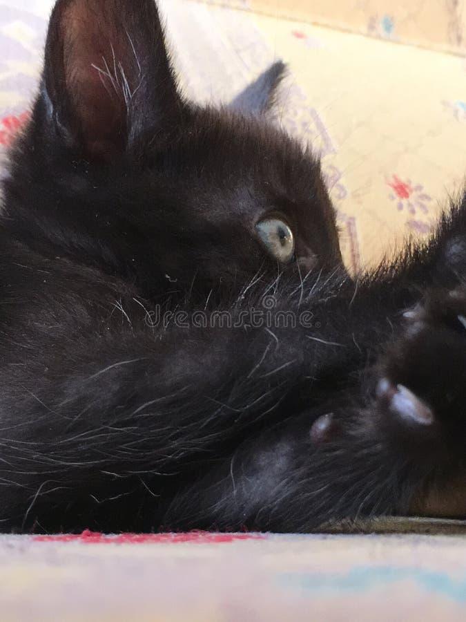 Poco mentira negra del gatito fotografía de archivo libre de regalías