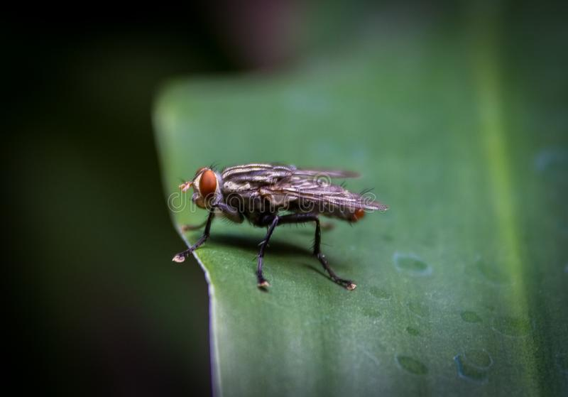 Poco mosca en una planta verde fotografía de archivo