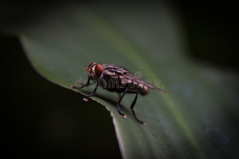 Poco mosca en una planta verde foto de archivo