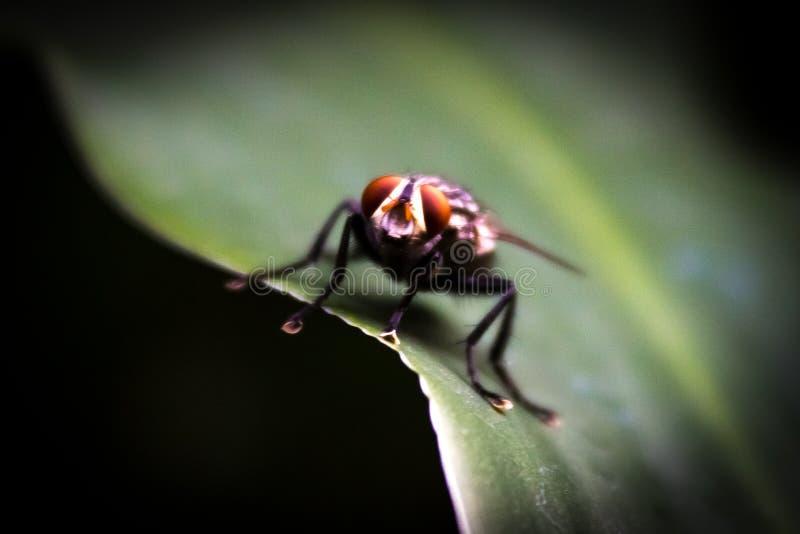 Poco mosca en una planta verde imagenes de archivo