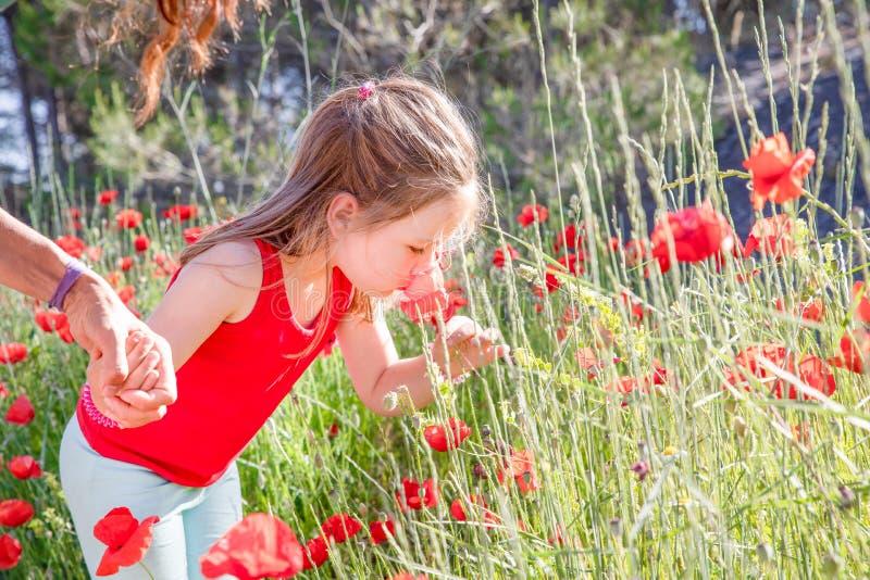 Poco muchacha linda en el verano que toma y que huele una flor roja de la amapola en el campo imagenes de archivo