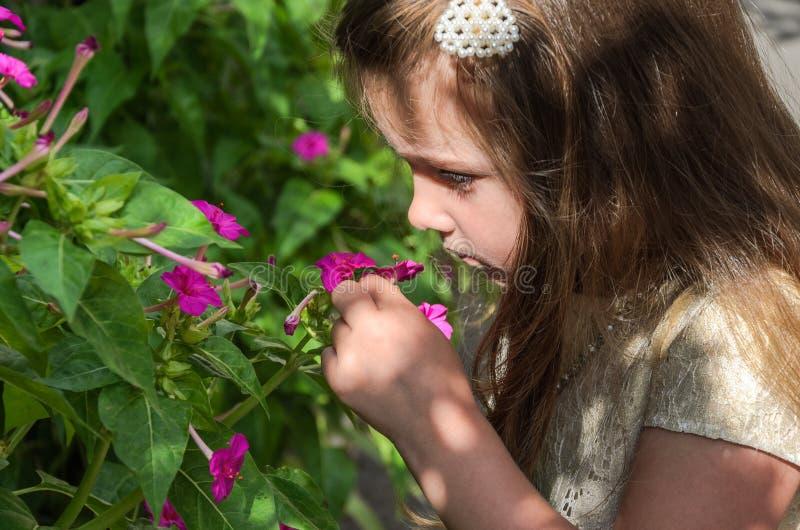 Poco niño encantador de la muchacha huele una flor en un arbusto fotografía de archivo