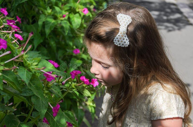 Poco niño encantador de la muchacha huele una flor en un arbusto imágenes de archivo libres de regalías