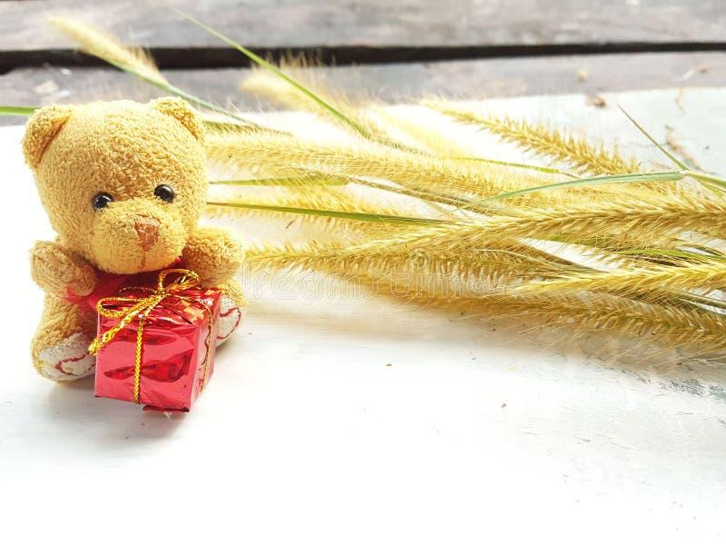 Poco oso con el gife imágenes de archivo libres de regalías