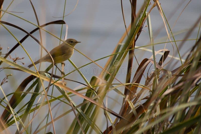 Poco pájaro en Plitvice fotos de archivo
