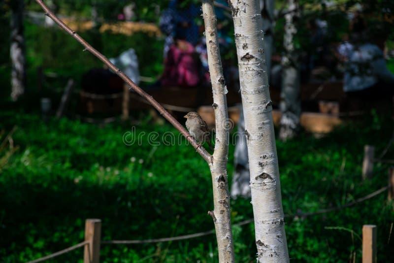 Poco pájaro sobre una rama de árbol fotos de archivo