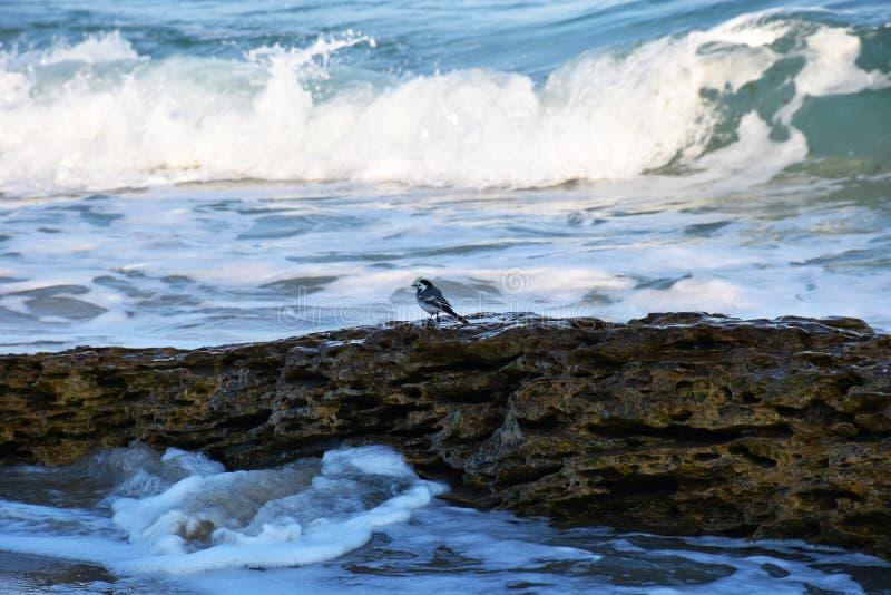 Poco p?jaro en una piedra por el mar imagenes de archivo
