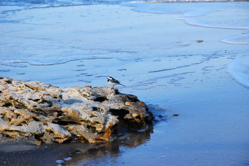 Poco p?jaro en una piedra por el mar fotos de archivo libres de regalías