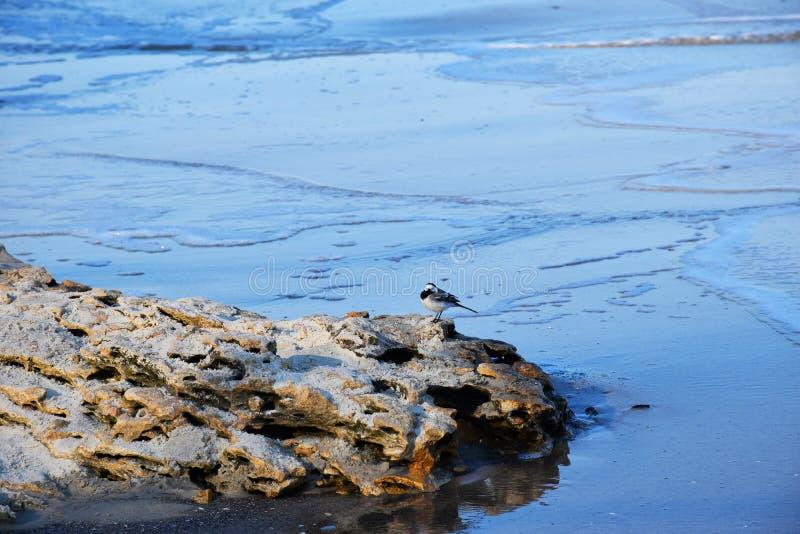Poco p?jaro en una piedra por el mar imagen de archivo