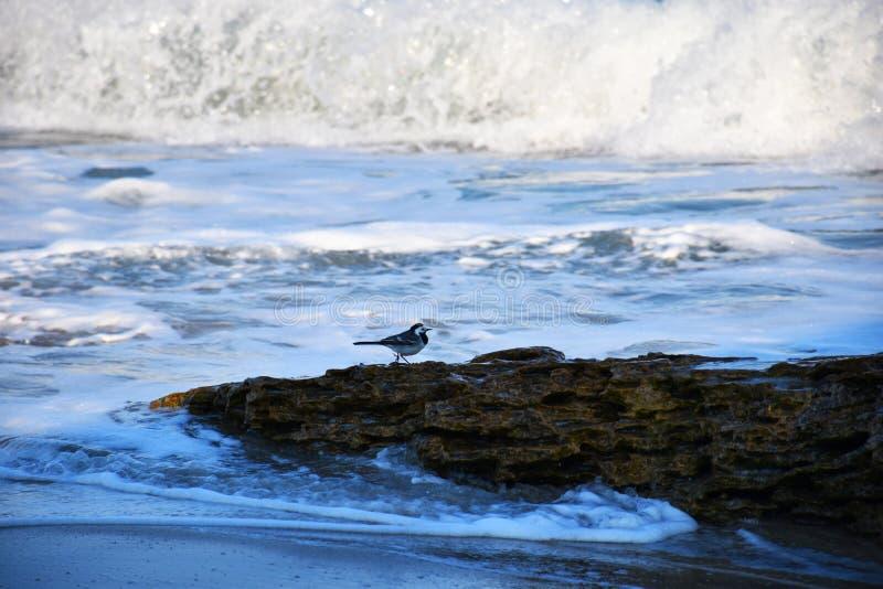 Poco p?jaro en una piedra por el mar foto de archivo libre de regalías