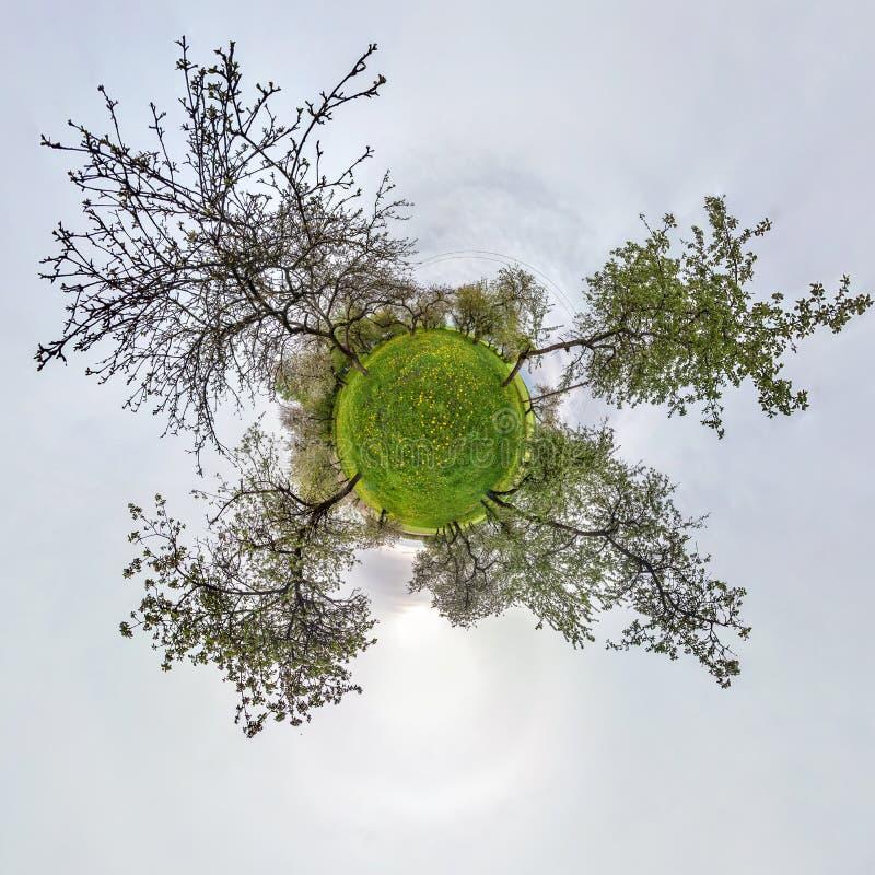 Poco panorama esf?rico del planeta 360 grados Visi?n a?rea esf?rica en huerta floreciente del jard?n de la manzana con los diente imagen de archivo