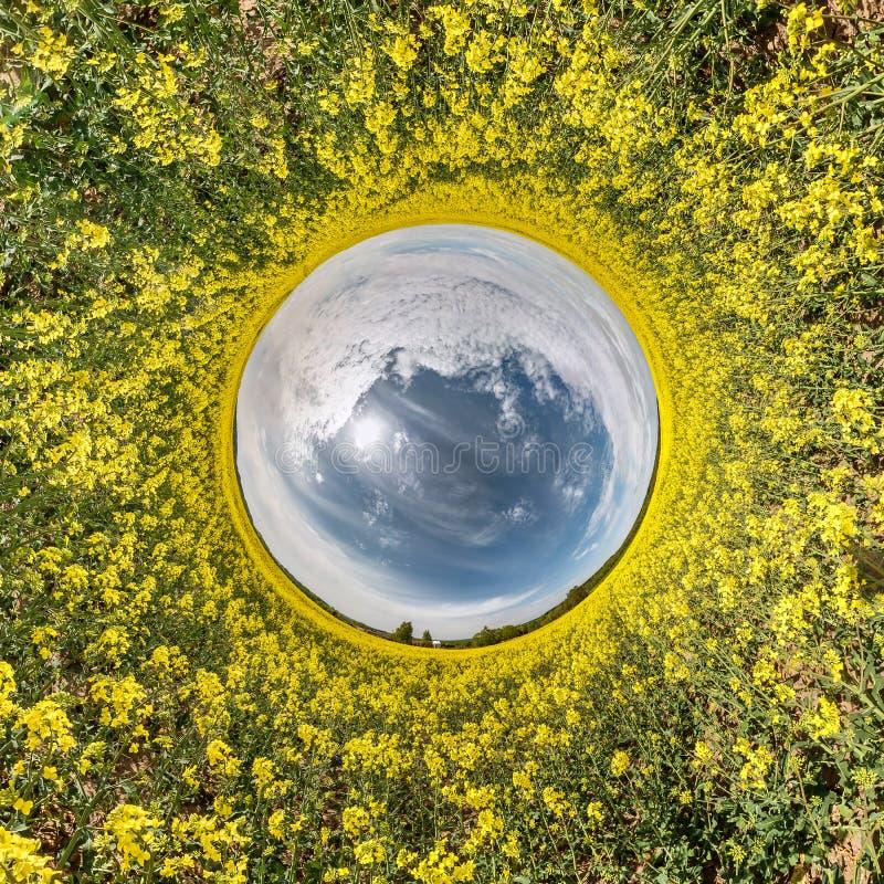 Poco panorama esf?rico del planeta 360 grados Visi?n a?rea esf?rica en la floraci?n en colza rapseed campo del canola Curvatura d fotos de archivo