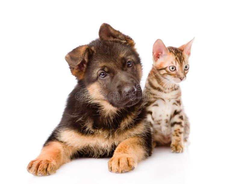 Poco perro de perrito del gato de Bengala y del pastor alemán que miente junto Aislado foto de archivo