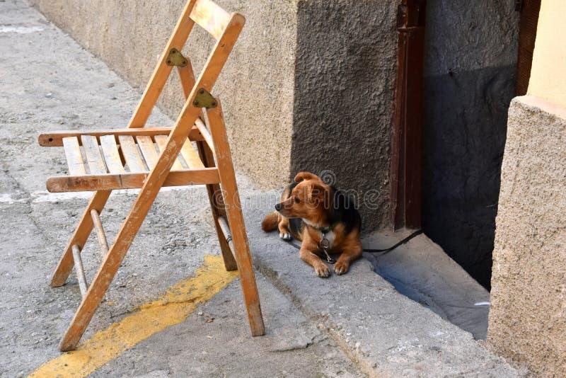 Poco perro mestizo, atado dentro de la casa, mirando la calle fotos de archivo libres de regalías