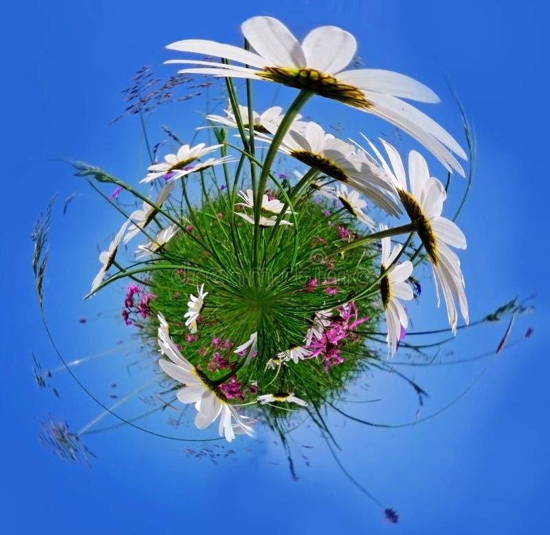 Poco pianeta con i fiori fotografia stock