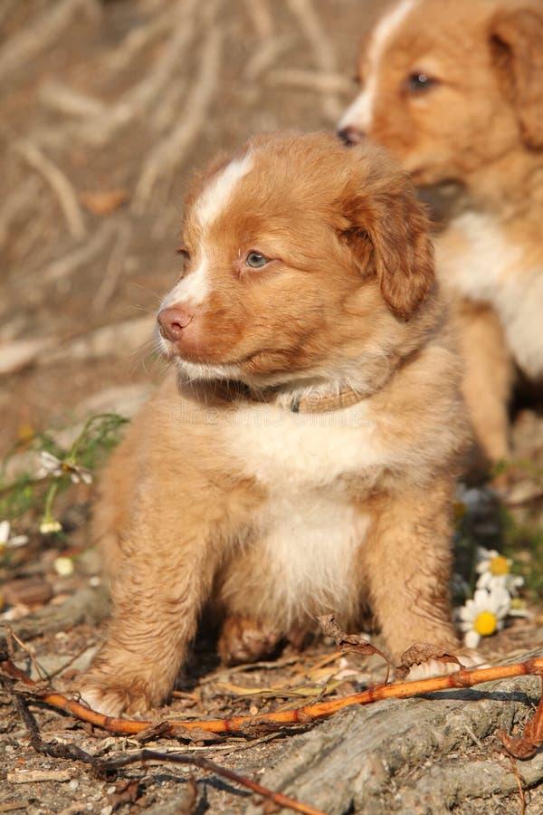 Poco profilo del cane del fiume fotografia stock