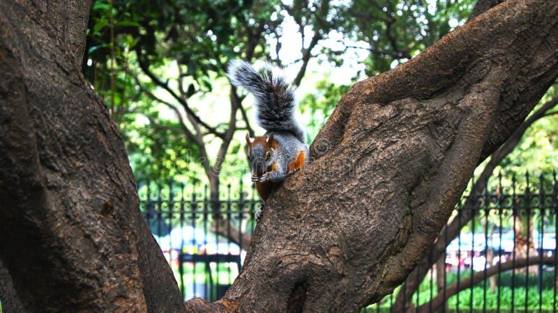 poco scoiattolo che sembra posare per fotografia fotografia stock