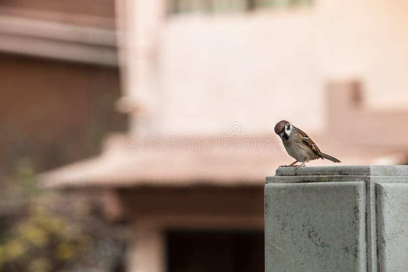 Poco uccello della via fotografie stock