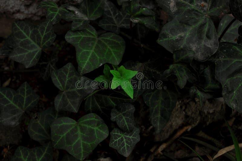 Poco verde foto de archivo libre de regalías