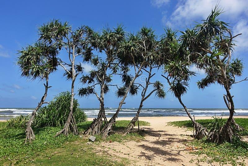 Pocos árboles en una playa de arena foto de archivo libre de regalías