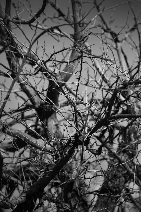 Początek spadki i nadzy drzewa obraz stock