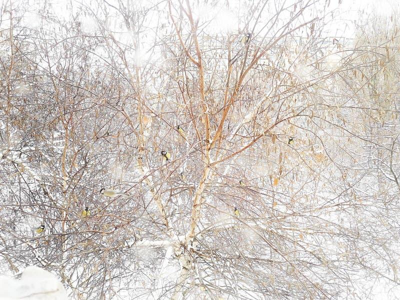 Początek zima Opad śniegu na zewnątrz okno Mali titmouses obrazy stock