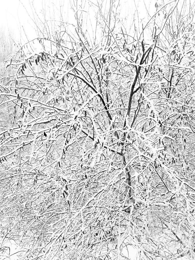 Początek zima z ciężkimi opad śniegu Piękno natura w zimie zdjęcia royalty free